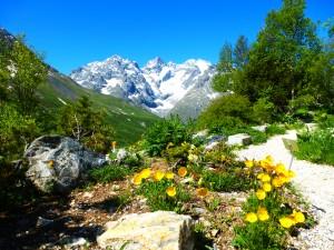 Botanical Garden Col de Lauteret